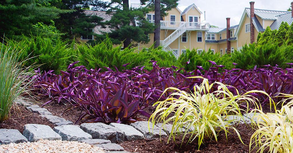 "A back view of the inn building through our colorful ""zen"" garden"